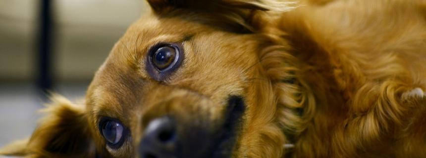 What Causes Kidney Disease In Dogs Rau Animal Hospital