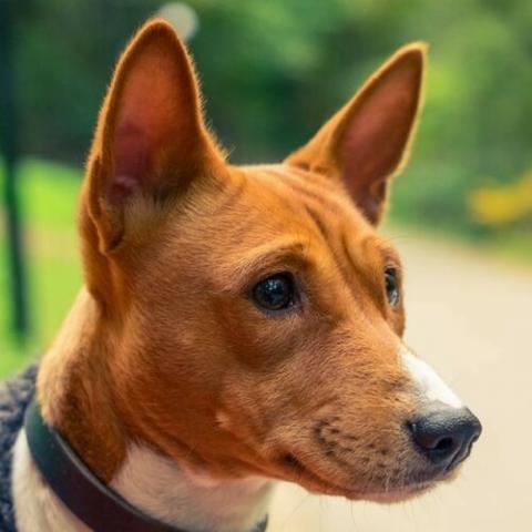 local veterinarian