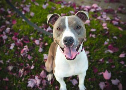 Preventing and Treating Fleas and Ticks For Dogs   Rau